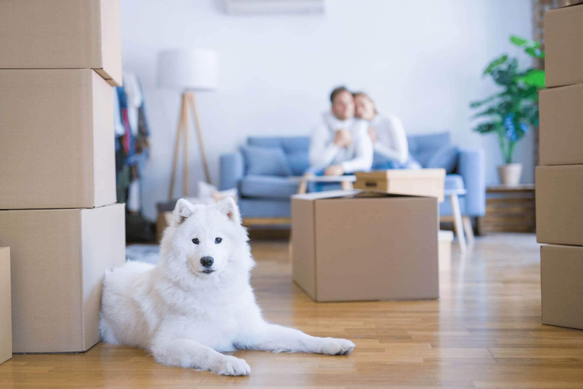 Trasloco di animali domestici- 5 cose da sapere 2